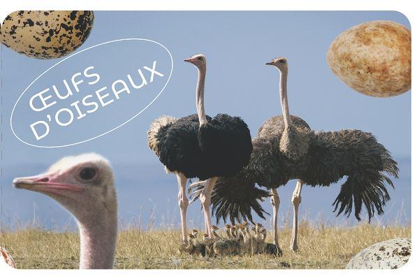Carnet Oeufs d'oiseaux
